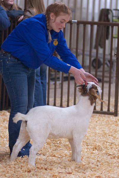 kay_county_showdown_goats_20191207-120.jpg