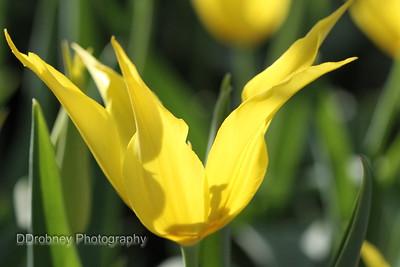 Elizabeth Park Greenhouse - Spring Flower Show