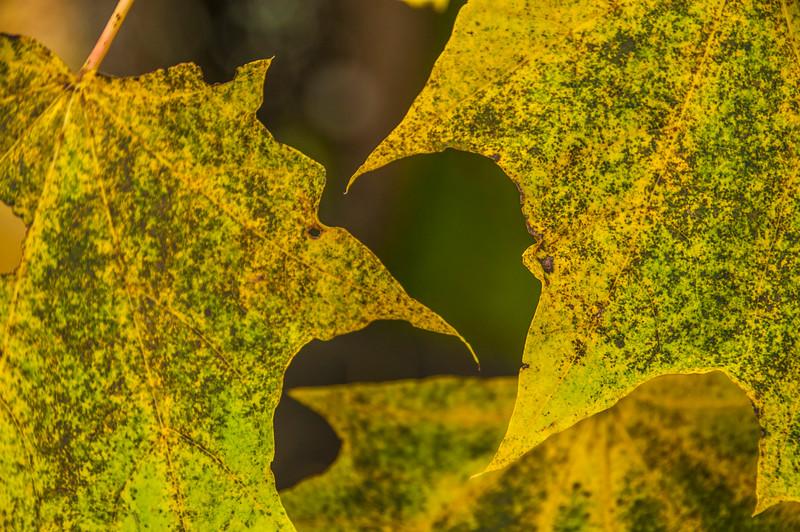 Fall_169_1.jpg
