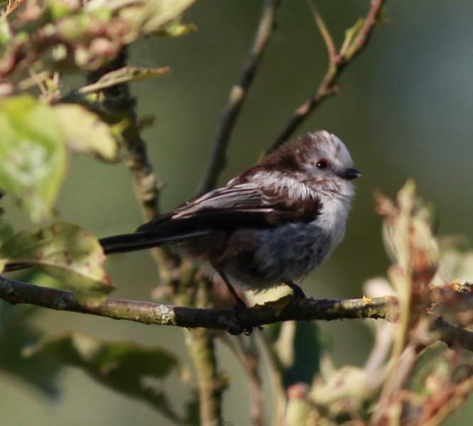 Mystery Bird  Amsterdam 2014 06 25-2.JPG