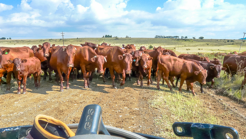 Free State Traffic Jam this time!