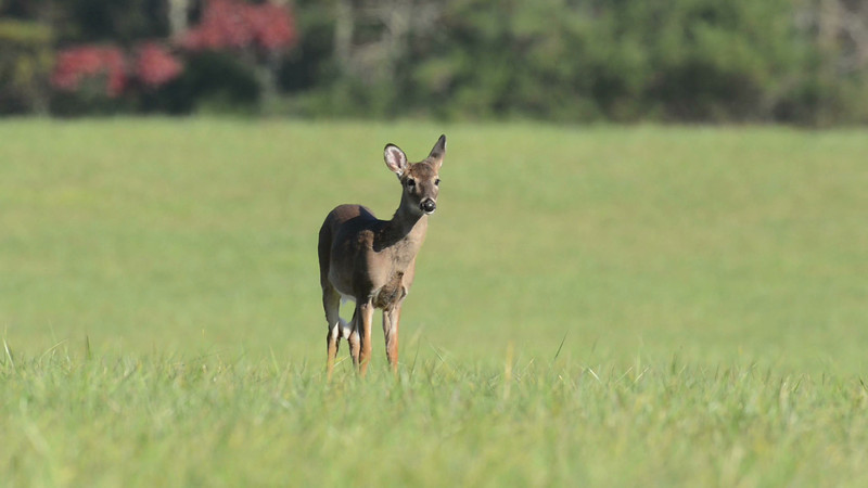 whitetail_fawn_01.mov