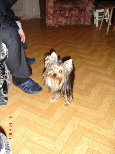 2006-12-16 Мегги 04.JPG