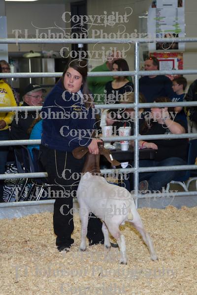 2013 Klein ISD Goat Show Class 3