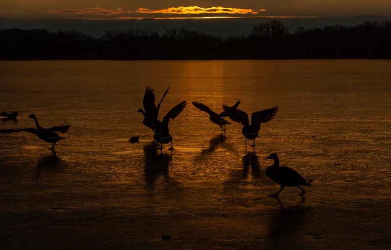 Sunset-Wingfoot-lake-geese5.jpg