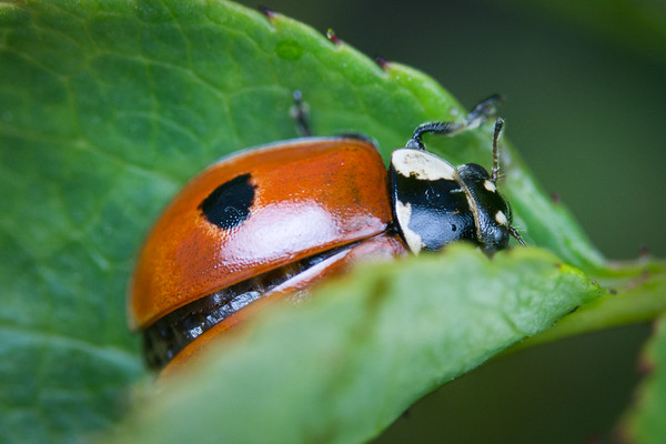 Insects and other creepy-crawlies