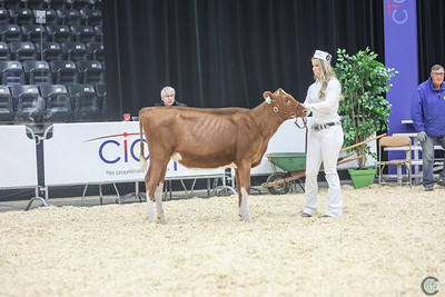 Quebec Spring Red Holstein Show 2018