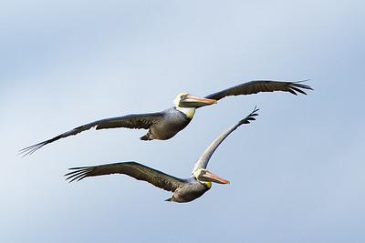 BIRD PHOTO CLASS (MAR 2020)
