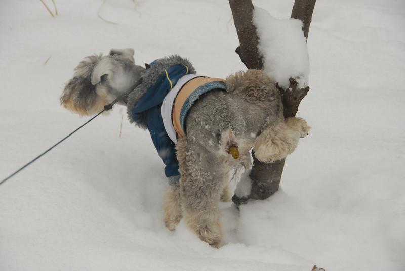 [20100103] 1st 2010 Snow in Beijing (36).JPG