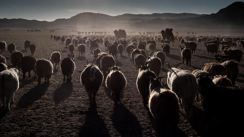 Mongolia - 2020 -3.jpg