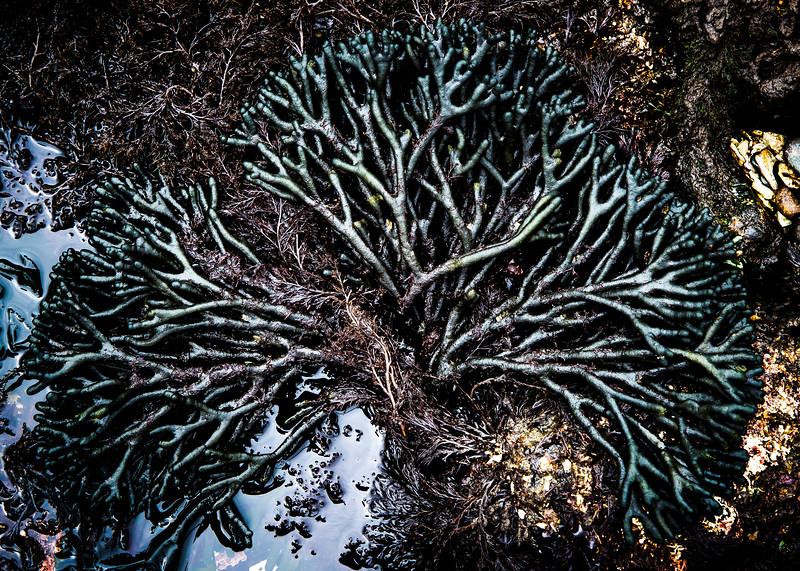 Sea Plant 2