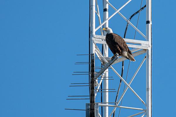 Bald Eagle Nest BE27 - December 15, 2019
