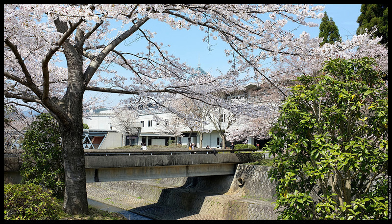 Kyoto International Convention Centre 4th April 2013 International Myeloma Workshop
