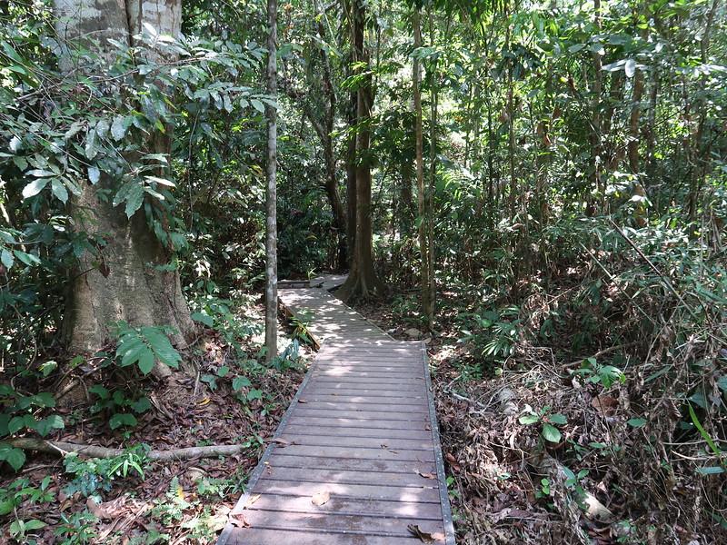 IMG_5208-jungle-walk.JPG