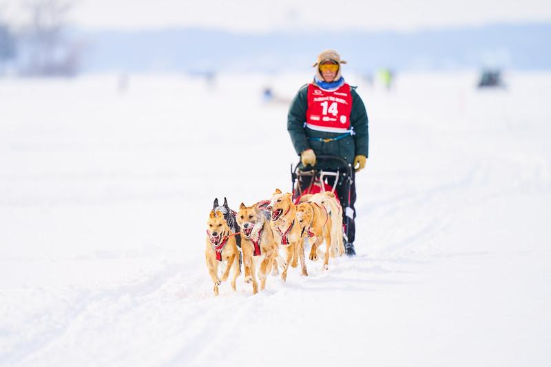 396    RobertEvansImagery.com IG @RobertEvansImagery   Klondike Dog Sled Race 2-9-2020.JPG
