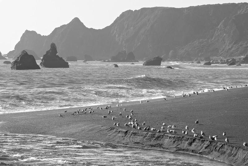 Sonoma Coast, mouth of the Russian River ref: f2c9ccfc-339a-4e69-935f-2e3ad5e2d5aa