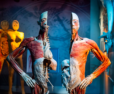 The Real Bodies Exhibit at Ballys