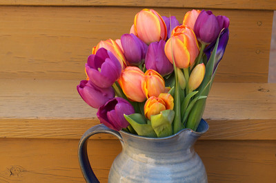 Mother's Day Tulips from Yaara