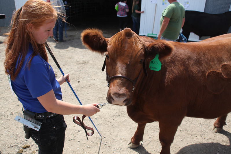 Havre Daily News / Floyd Brandt  Alyssa Gruszie 4H / FFA Senior Beef Showing Blain County Fair Saturday, with Dude