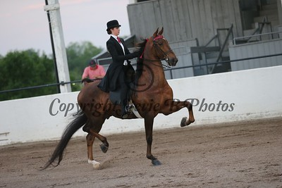 20. Juvenile 3 Gaited Show Pleasure