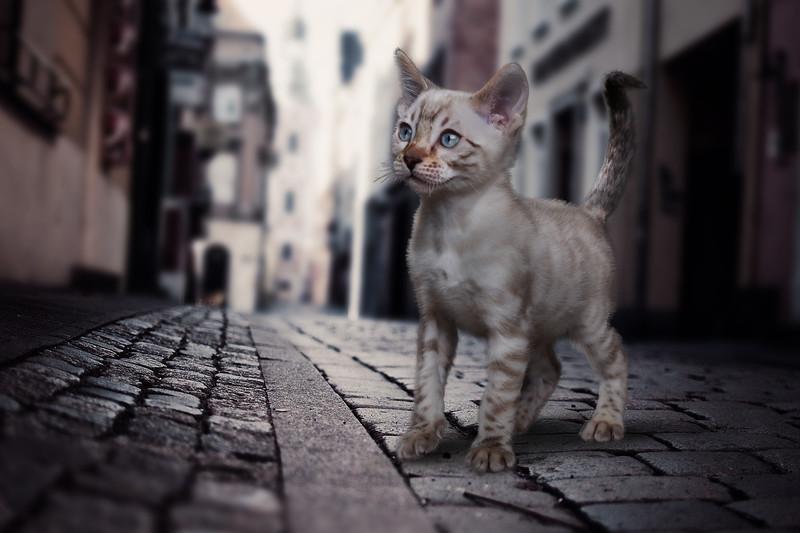 chaton-23.jpg