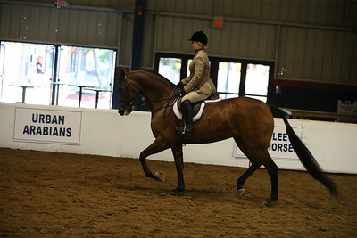 132 742 HA/AA Hunter Pleasure ATR  Championship