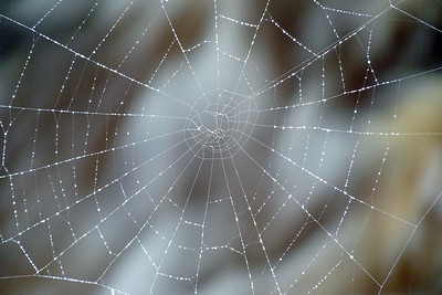 Spider's Web August 2011, Cynthia Meyer, Tenakee Springs, Alaska