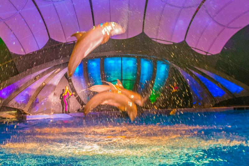 GA Aquarium with Linc, Ali & Abe-115.jpg
