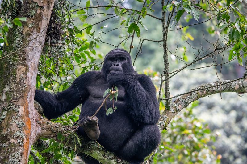 Uganda_T_Gor-2664.jpg