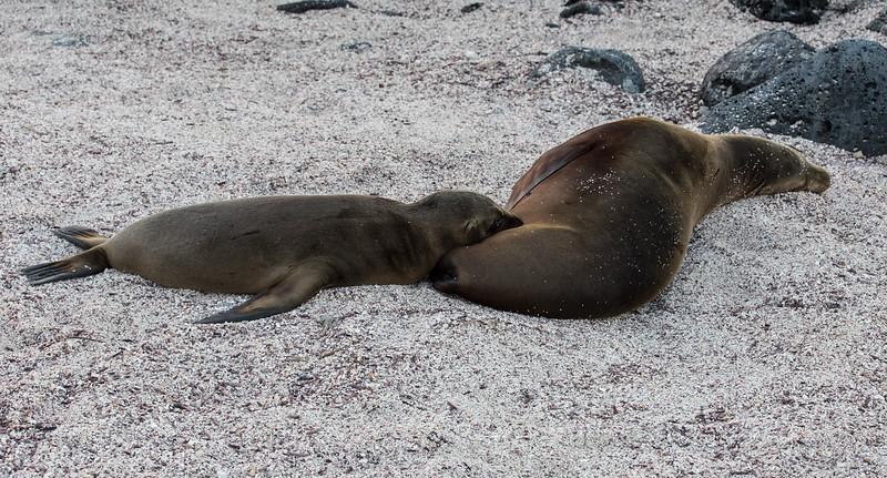 Galapagos_MG_4271.jpg