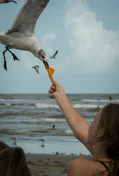 Galveston 0819-9705.jpg