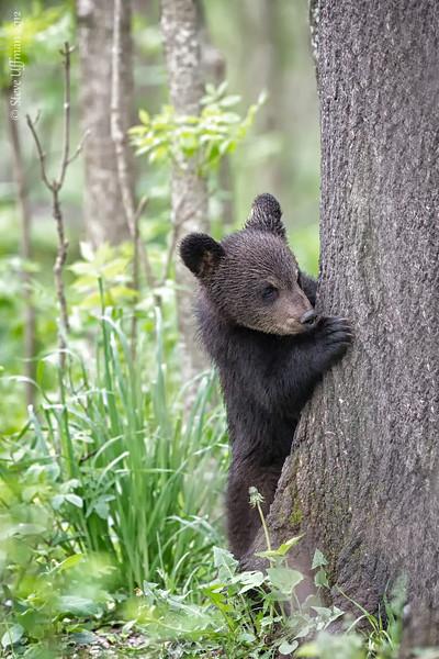 20120520-_Q2C6640Black_Bears-Edit.jpg