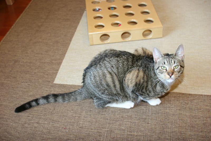 Anne's cat, Slinky