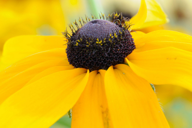 flowers_20080714-020.jpg