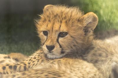 18.03.30 SD Safari Park BUTTERFLIES 2