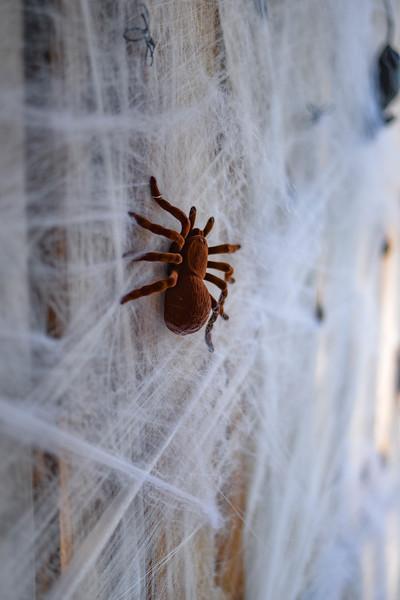 Halloween at the Barn House-14.jpg