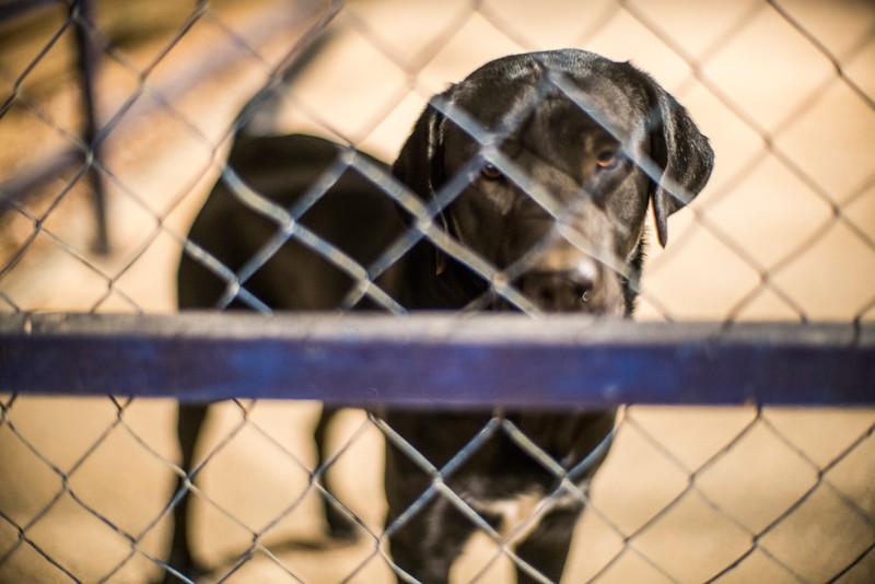 Dog behind a fence, Spain