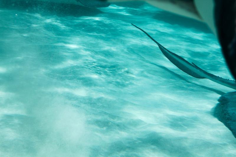 cayman--11.jpg