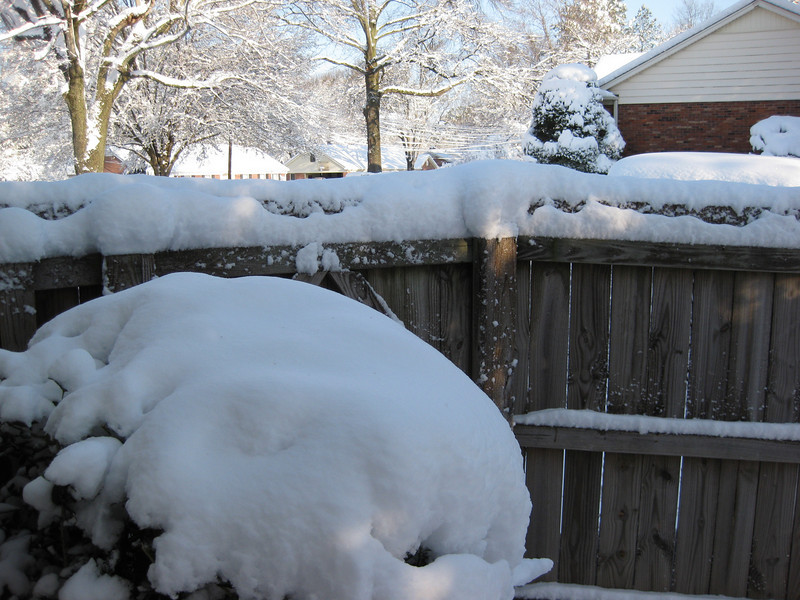 Snow in Jackson_20090301_002.JPG
