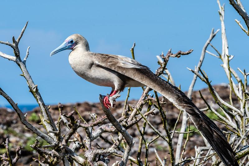Galapagos-4142.jpg