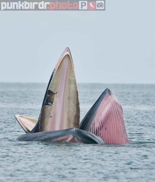 whale 860.jpg