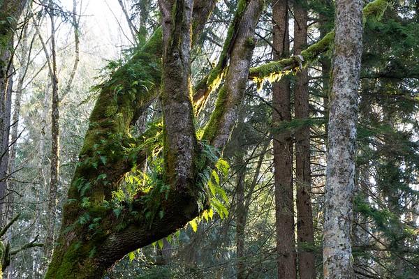 Cougar Mountain Regional Wildland Park