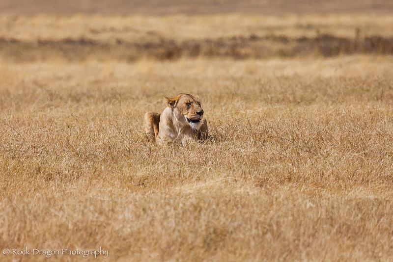 Ngorongoro-29.jpg