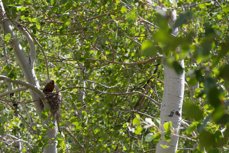 2011_07_03 Wyoming 195.jpg