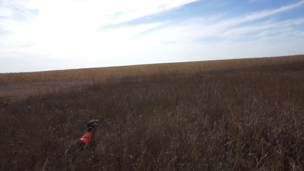 Hunting Videos