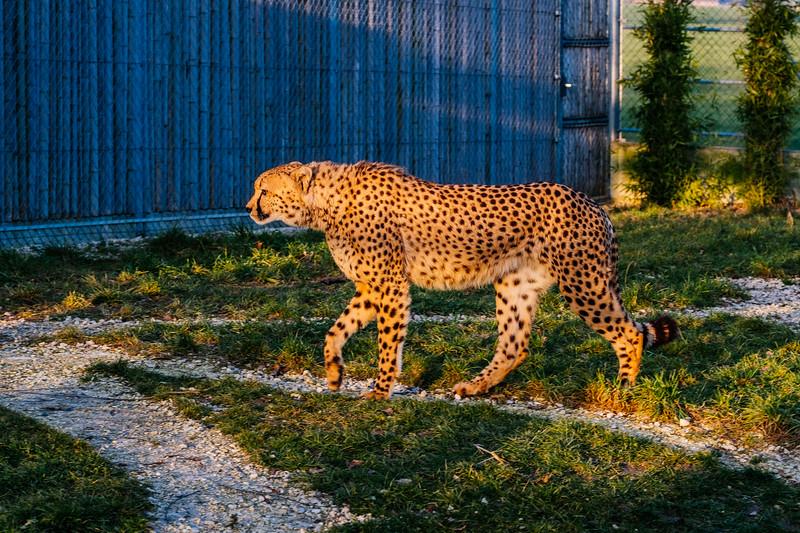 Tonis Zoo-0363.jpg
