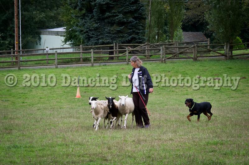 PacNW_HT_Sun_Sheep-6804