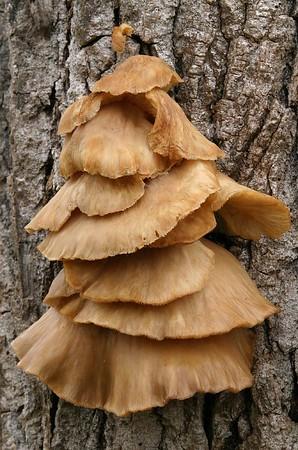 Mushrooms & etc..