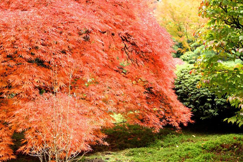 Portland Japanese Garden  11-11-11  3531.jpg