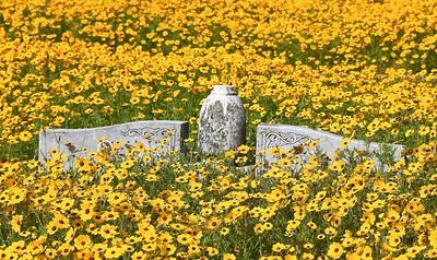 Cemetery Flowers 2019